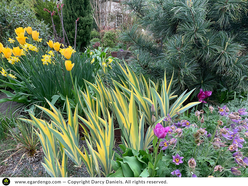 bulbs complement and mingle with other plants