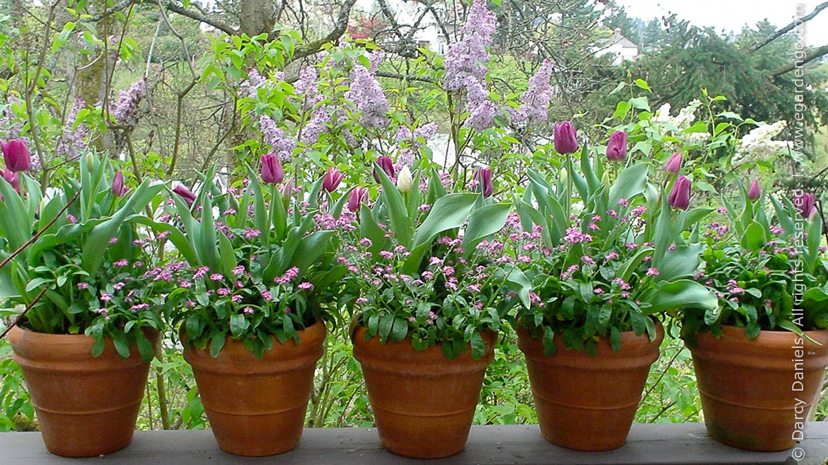 bulbs in containers