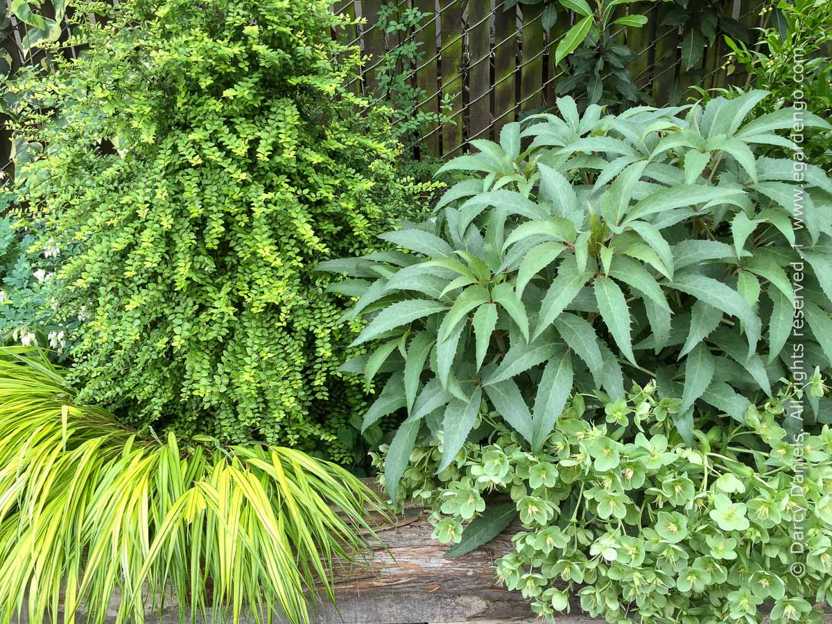 Contrasting Foliage Texture in Part Sun Garden